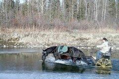 """Melany Moore driving Ojibwe Horse Bidaaben (Ojibwe for """"Sunrise"""")."""