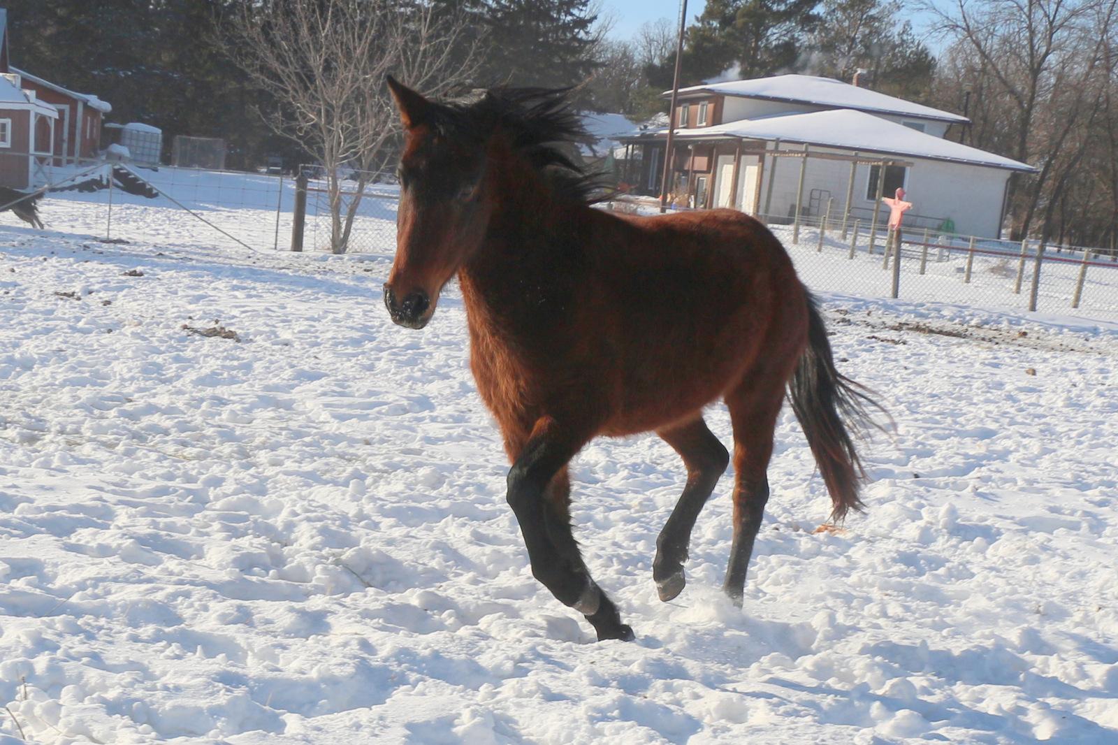 Image of Ojibwe Horse
